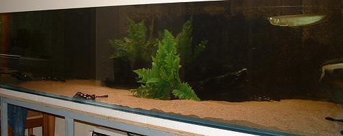 rote würmer im aquarium